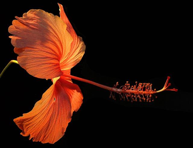 19-11flower.jpg