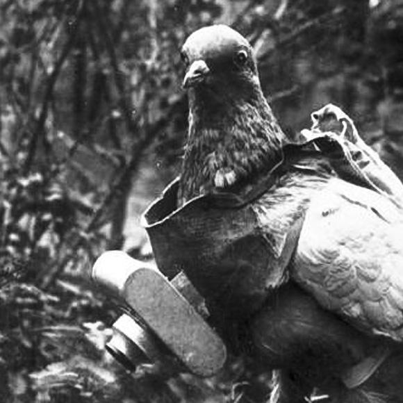 pigeoncamera.jpg