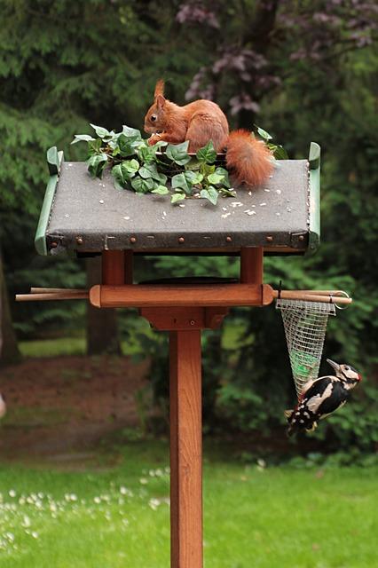 squirrel-818128_640.jpg