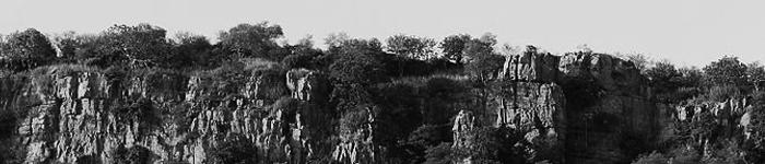 jungle2.png