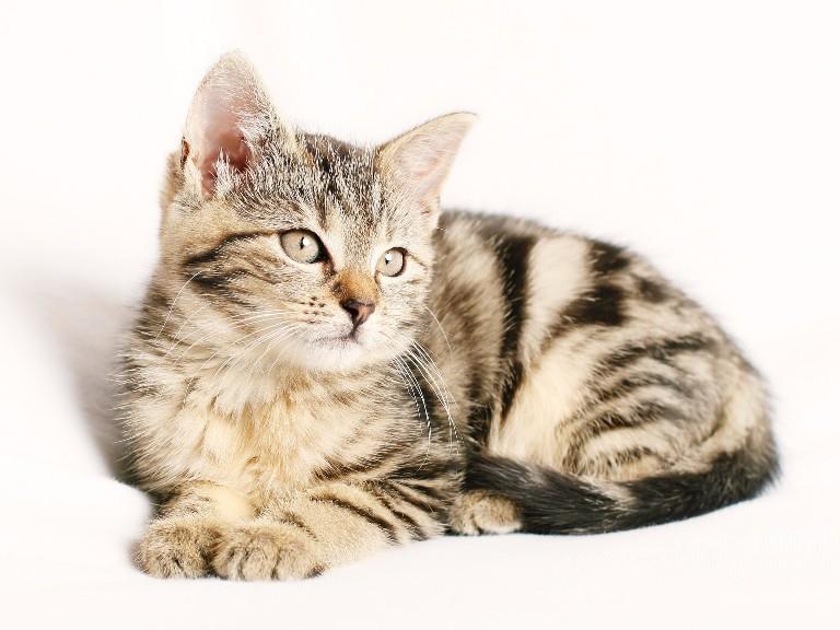 living-cat.jpg
