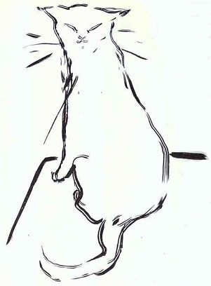 Cat085.jpg