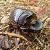 Beetle-2.png