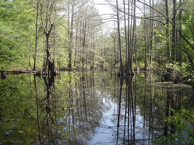 reke_wood.jpg