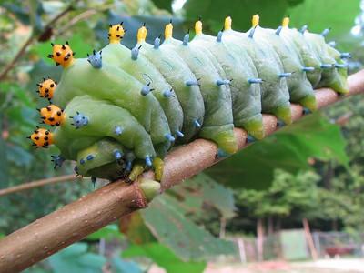 006-Caterpillar-new.jpg