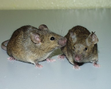 two_mice_photo.jpg