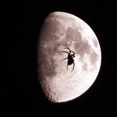 moon_spider2.png