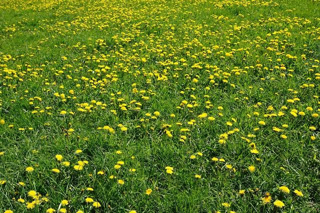 meadow-1387395_1920(1).jpg