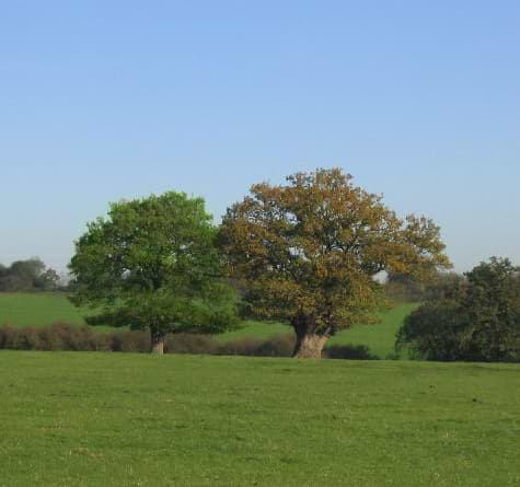 Tree-new.jpg