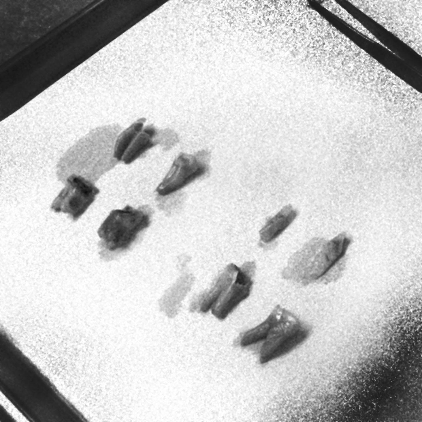 toothtray.jpg