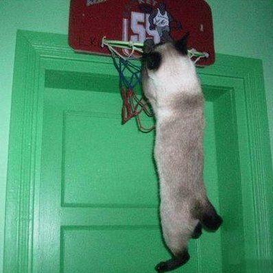 basket_cat.png