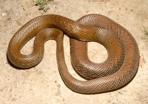 Loop-Snake.png