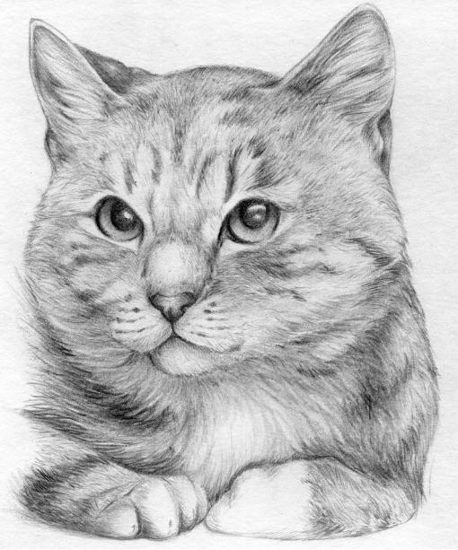 Sketch_Agatha.jpg
