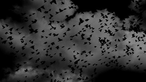 birds-691274_640.jpg