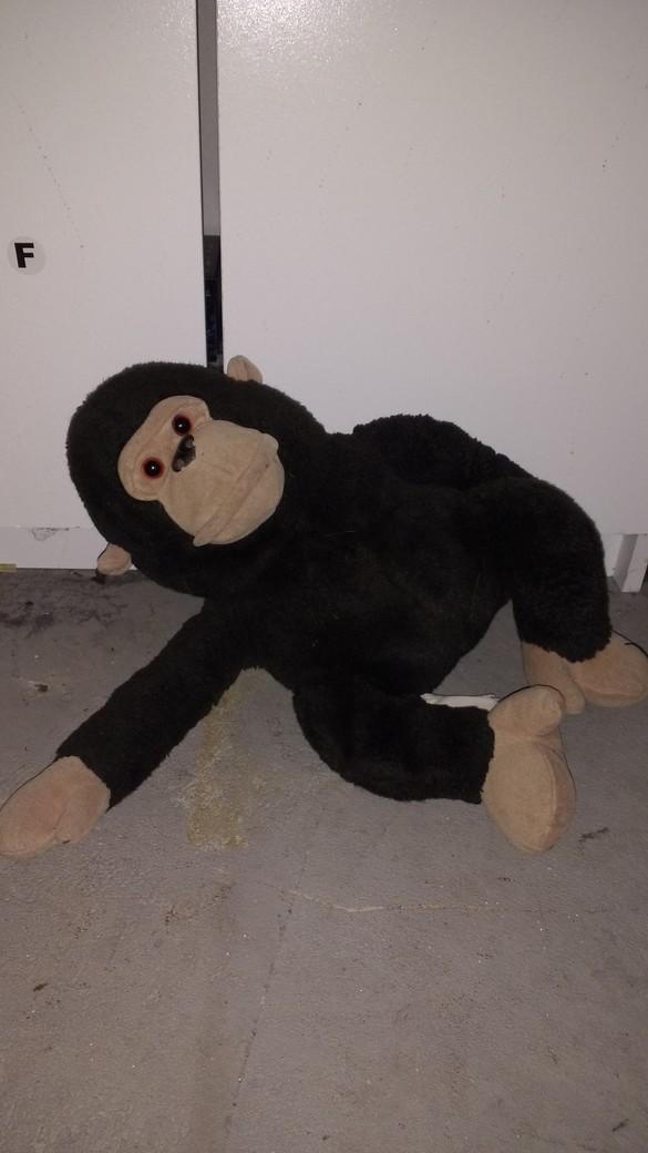 gorilla-sm.jpg