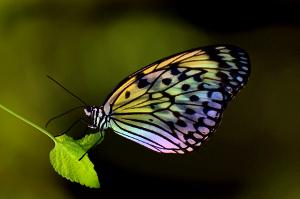 butterfly..jpg
