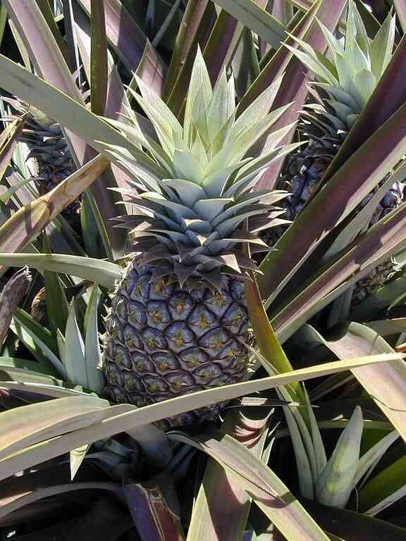 fruitofthegods.jpg