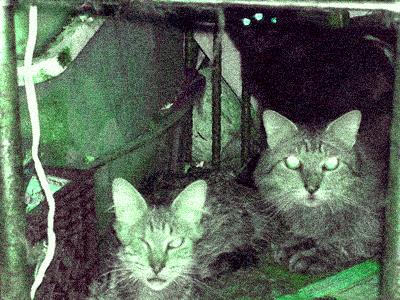 basementcats.jpg