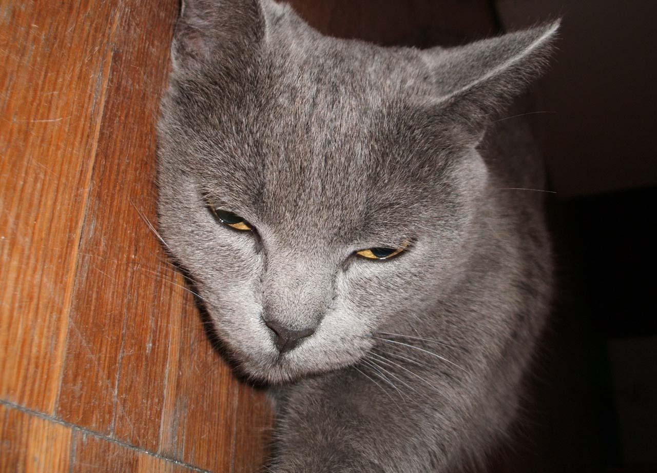 grey_cat_floor.jpg