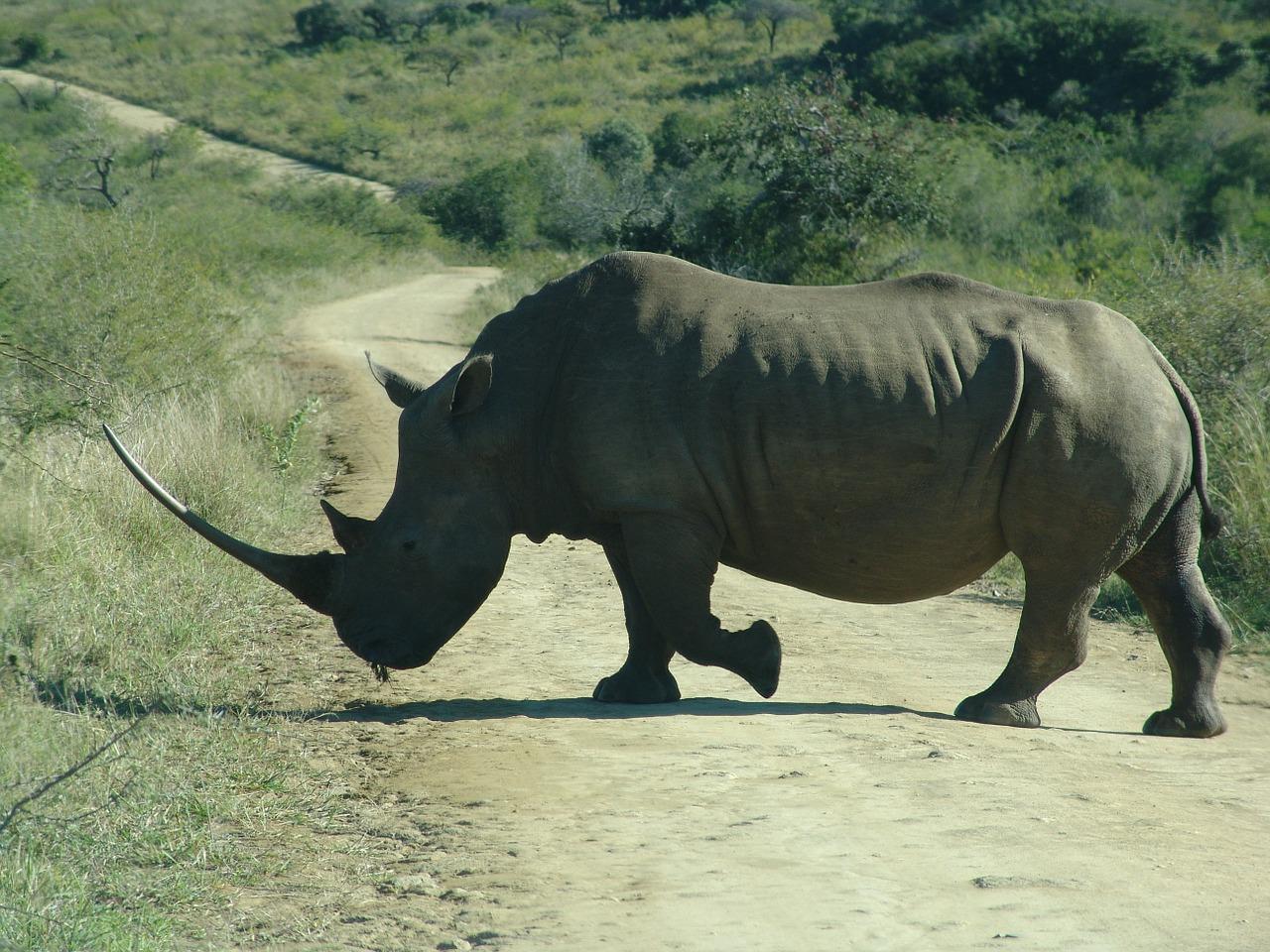 Rhino-A.jpg