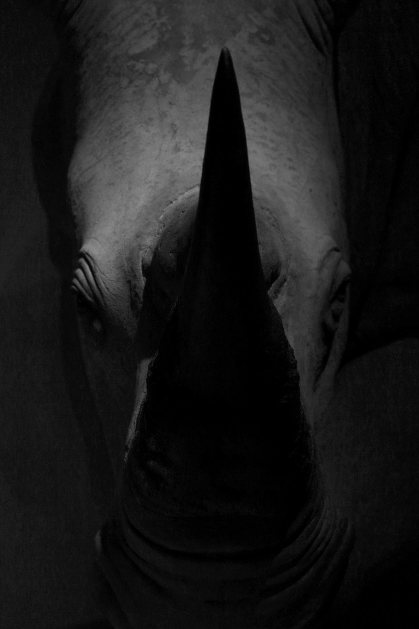 RhinoBook.jpg