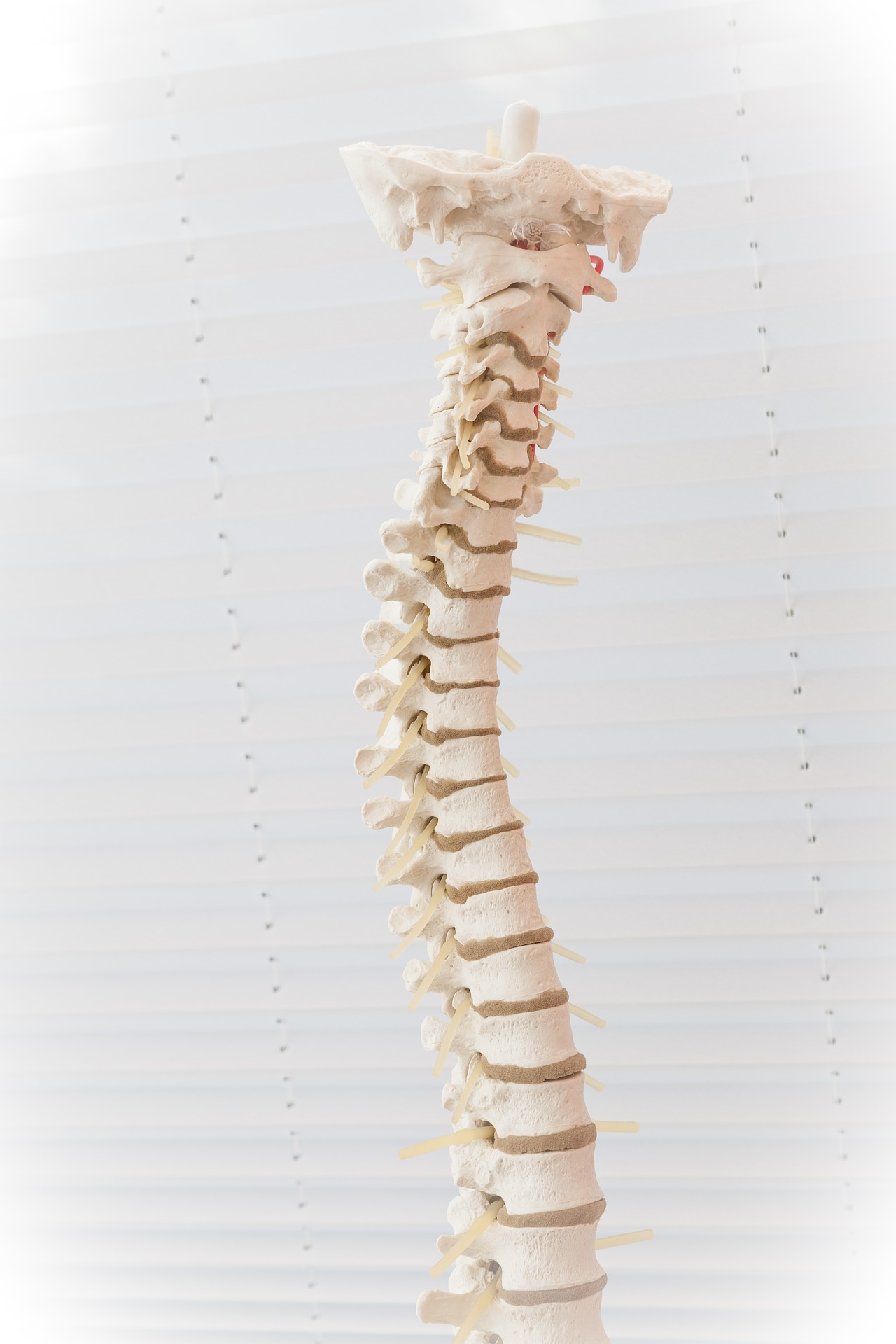 spine-2539697_1920.jpg
