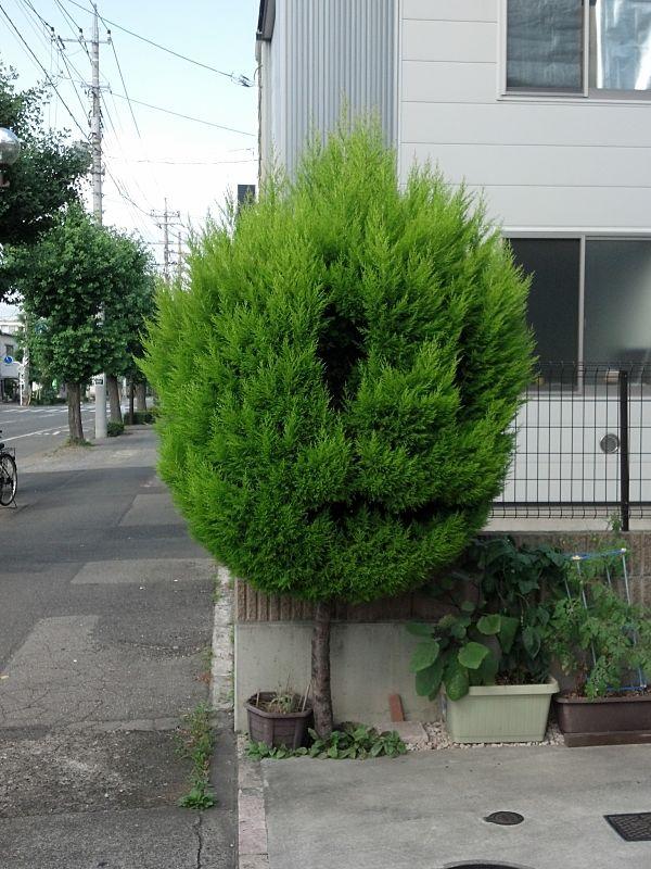 yosh0123-wood1.jpg