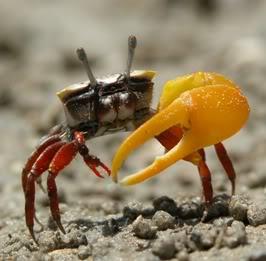 crabscp.jpg