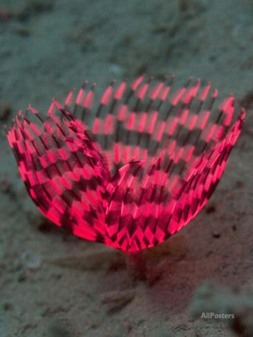 louise-murray-indian-tubeworm-or-feather-duster-worm-is-a-filter-feeding-polychaete-annelid.jpg