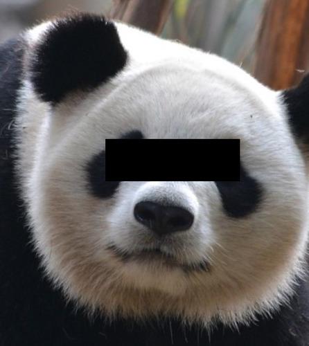 PANDA.2