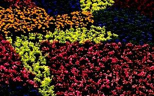 four-colours