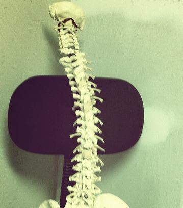 bone0094.bmp